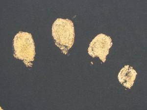 You are as Unique as your Fingerprints